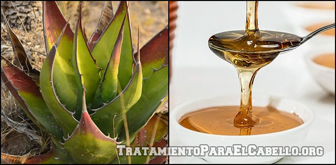 la Sabila y la miel de abeja