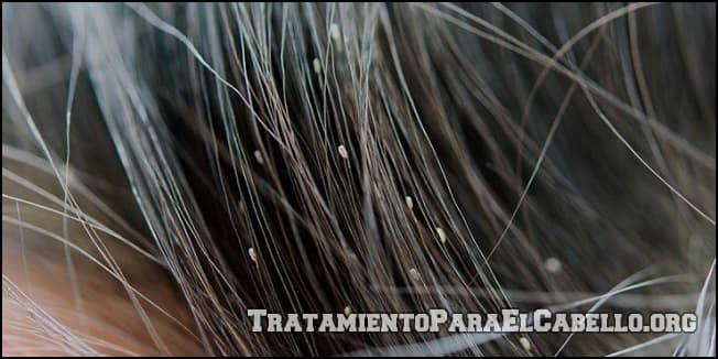 Mayonesa en el cabello para los piojos